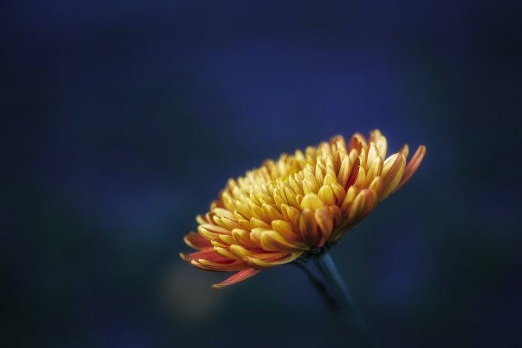 andrea_pavlo_tempo_de_primavera_flor